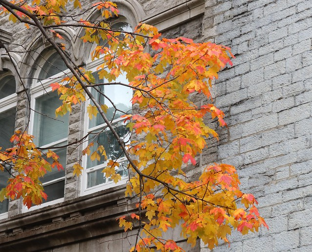 Autumn leaves outside a window