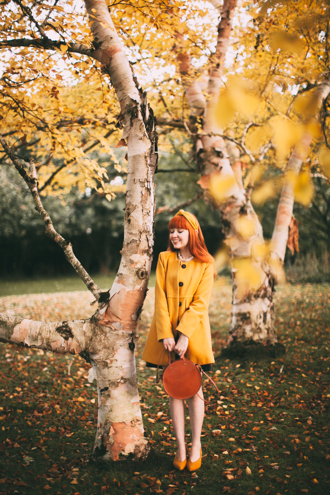 birch trees-8