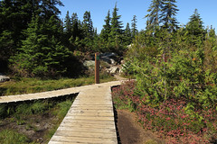 Wooden walkway through Cypress forest in West Vancouver, Canada