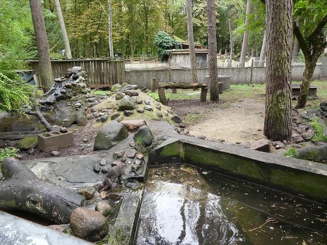 Zwergotteranlage, Tierpark Neumünster