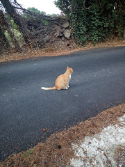 IMG_20180916_083135 - Photo of Montner