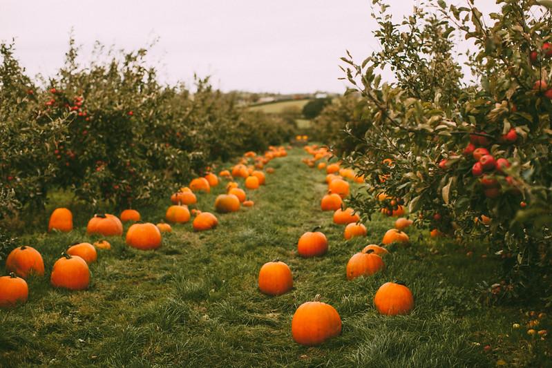 pumpkins-50