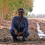 A worker in agroforestry in Luxor governorate, Egypt.