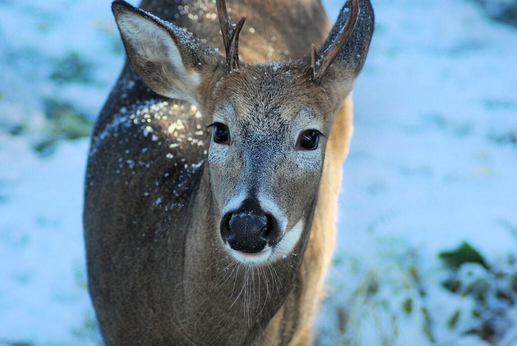 2018-10-09.deer7