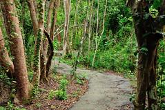 Gumbo-limbo Trail