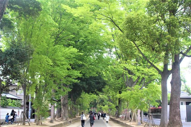 musashiichinomiya-hikawa009