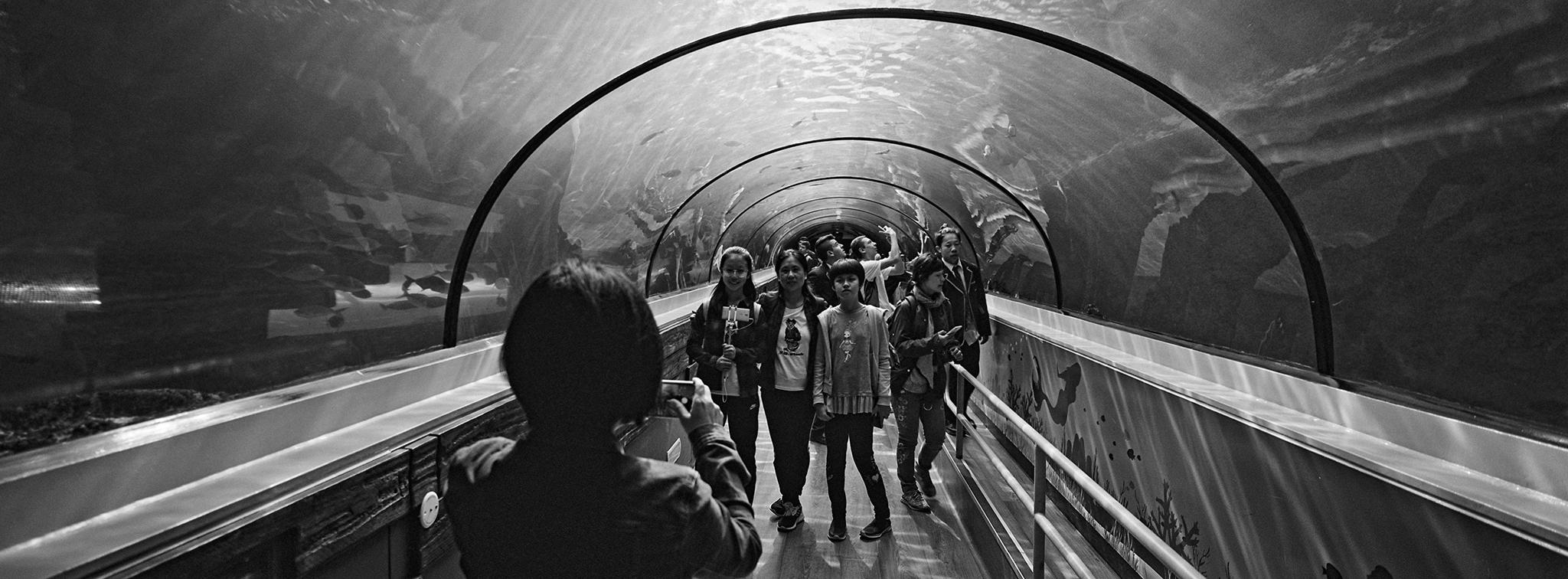 Sydney Aquarium v