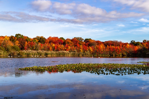 autumn trees massapequapreserve longisland newyork fallcolors fallfoliage morning landscape rpg90901 woods sky pond fallcolor water clouds canon 6d canonef24105mmf4lisusm fall massapequa nassaucounty park 2015 october 0910