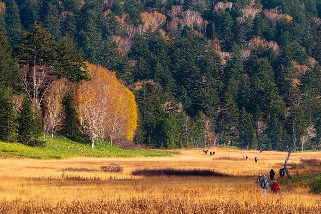 大江湿原を歩くハイカー@長蔵小屋展望台
