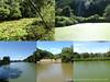 Photo:【ため池環境 現地調査2018 第3弾(奈良県北部エリア)ご報告】 By 自然再生と自然保護区のための基金