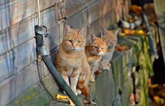 Autumn cats 😍 Finland 2018.