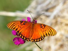 Butterflys & Moths