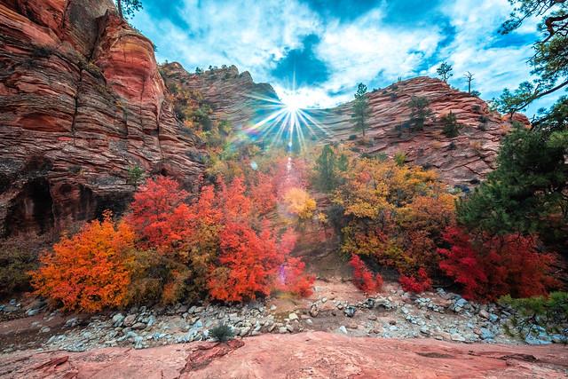 Zion National Park Fine Art Landscape Photography! Autumn Colors Utah Fall Coliage! High Res 4k 8K Photography! Elliot McGucken Fine Art American West Autumn Landscapes Nikon D810!  Nikon D810 & Nikon AF-S NIKKOR 14-24mm f/2.8G ED Lens !