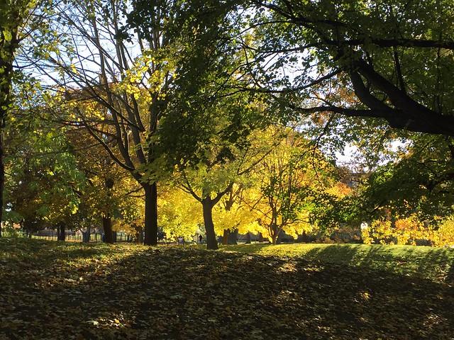Sunlight in Autumn