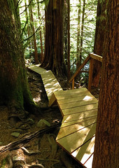 Wooden walkway through Avatar Grove near Port Renfrew on Vancouver Island, Canada