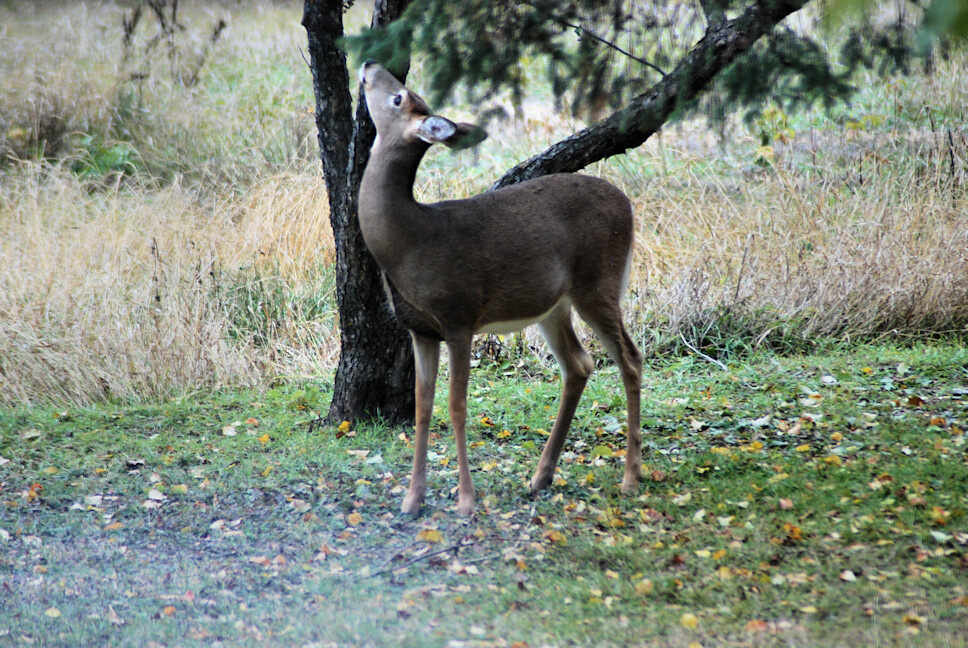 2018-10-08.deer