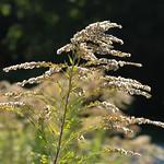 018Sep 28: Autumn Golden Flora Macro