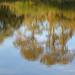 Reflection - Myton Fields (53)