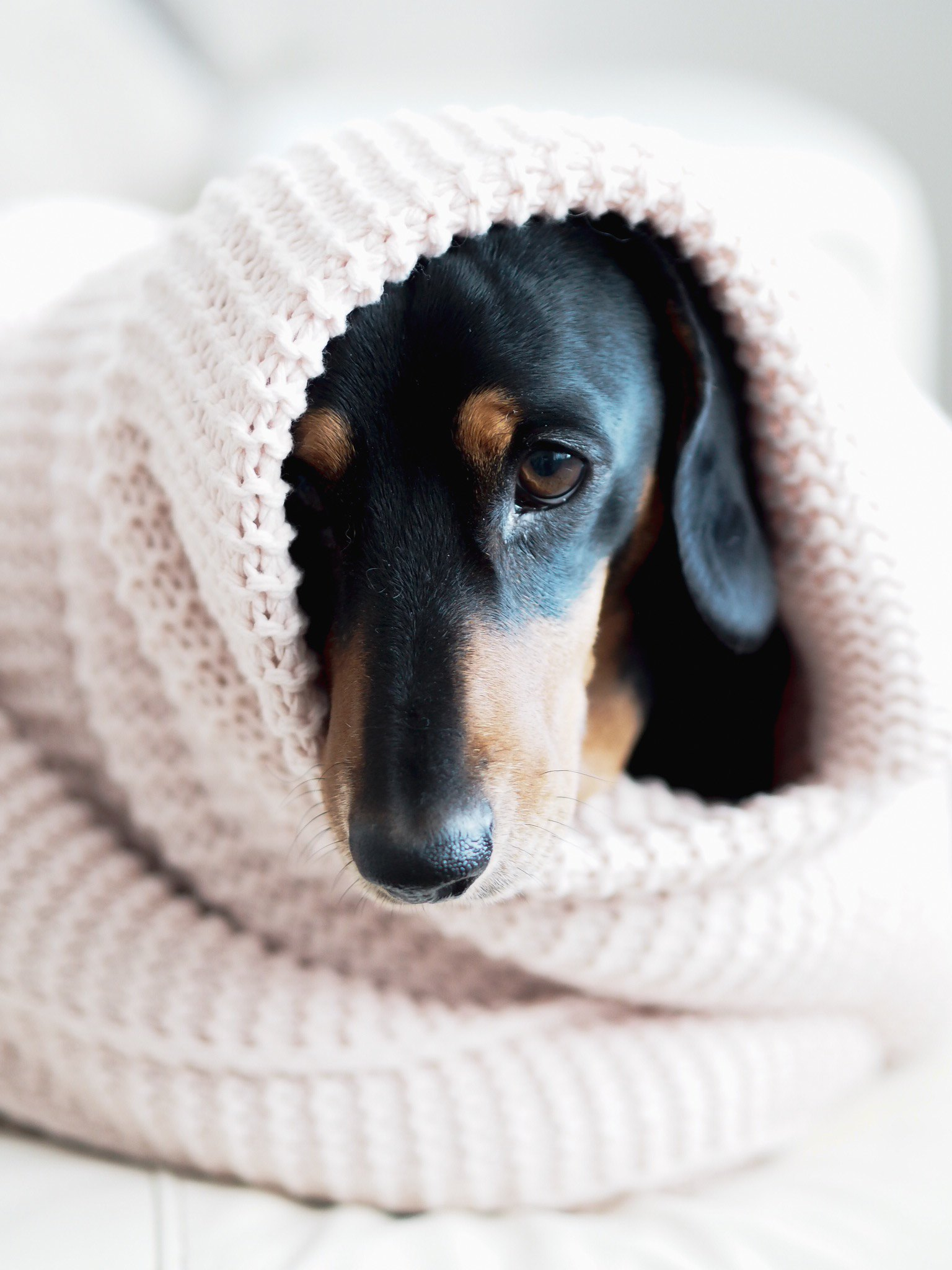 how to keep your dog calm this bonfire night