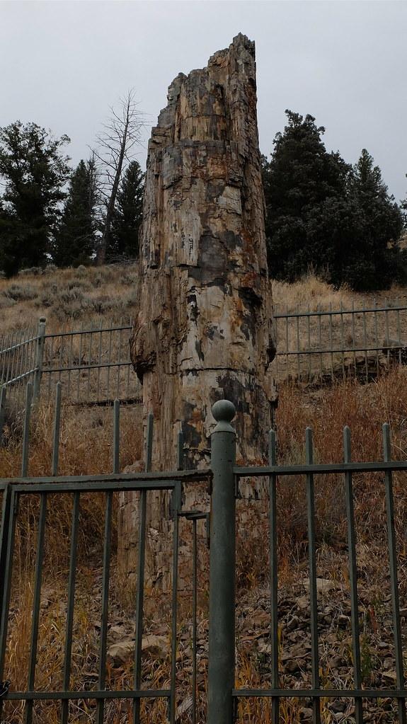 Qué buen tronco, parece que solo tuviera 40 millones de años