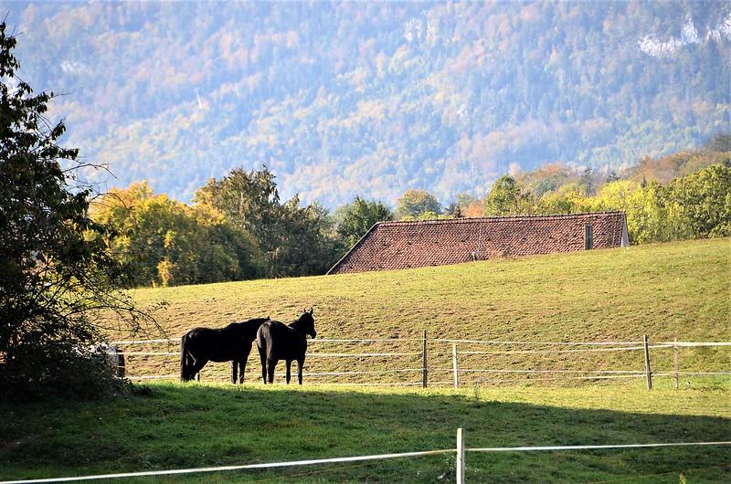 Horses 07.10 (1)