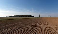 Wheat fields in Brie region