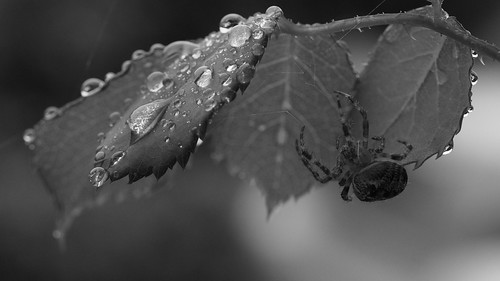 Sheltering from an Autumn shower
