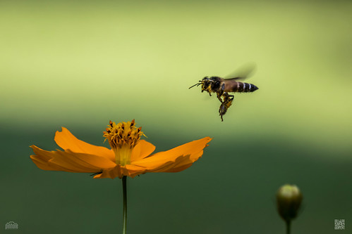 Honey Bee's Honeymoon