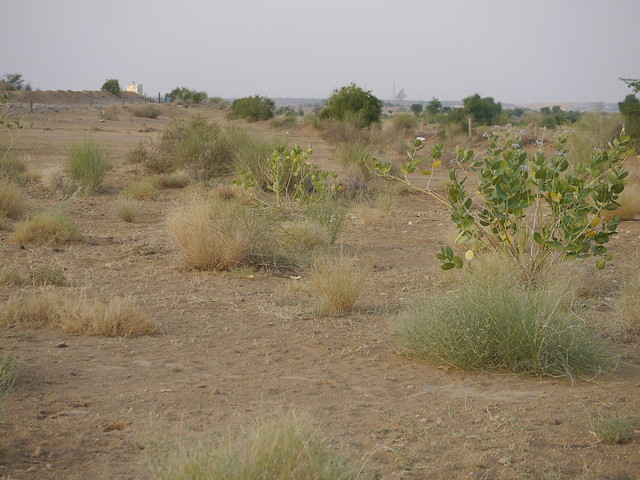 ... arid landscape, Panasonic DMC-G5, LEICA DG MACRO-ELMARIT 45mm F2.8