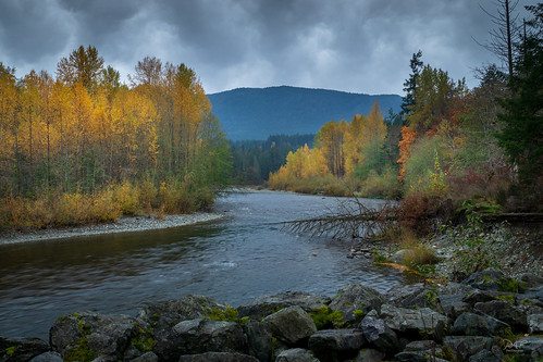 cowichanvalley cowichan cowichanriver autumn forest foliage vancouverisland bc britishcolumbia canada rocks rock rural river gold tree trees sony sonya7m2 a7m2 fall country landscape landscapephotography l clouds overcast