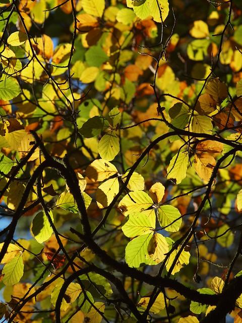Autumn leaves, Olympus E-620, SIGMA 105mm F2.8 MACRO