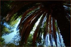 Sous l'ombre du palmier et d'autres arbres - Photo of Ponteilla