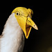 Masked Lapwing by nal from miami