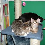 Primary photo 3 for 2004