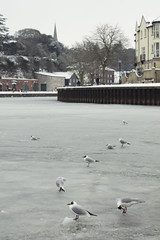 Exeter IMG_7334 RS
