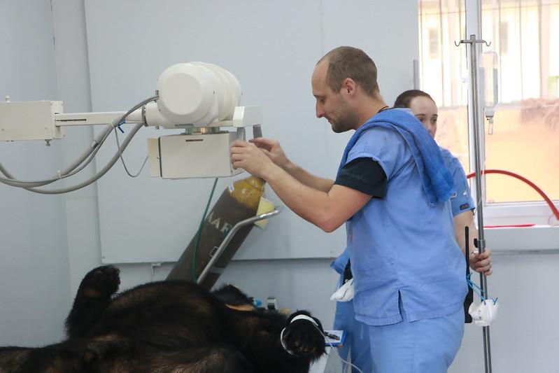 Senior Veterinary Surgeon Shaun Thomson carries out health check for Precious