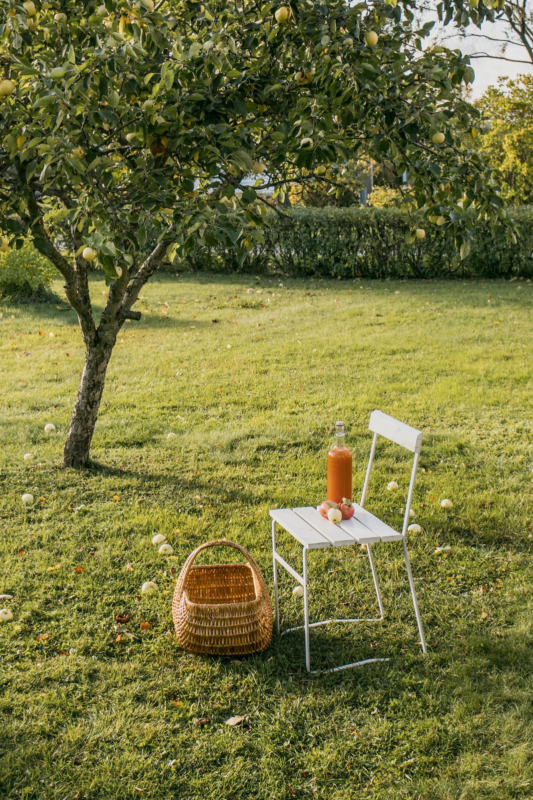 180923 - Äppelmustning i Bjästa