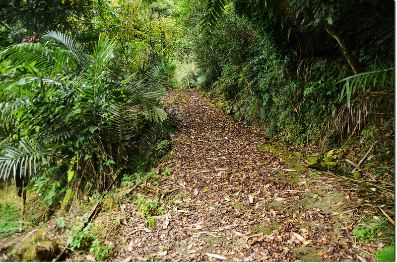 分水嶺山登山步道