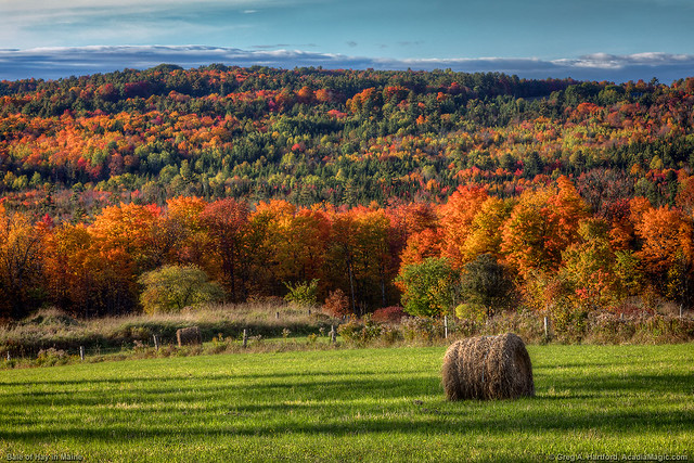 Bale of Hay During Autumn