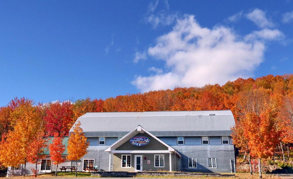 Autumn Scenery Fall Colours Sugar Maple Acer Saccharum Maple