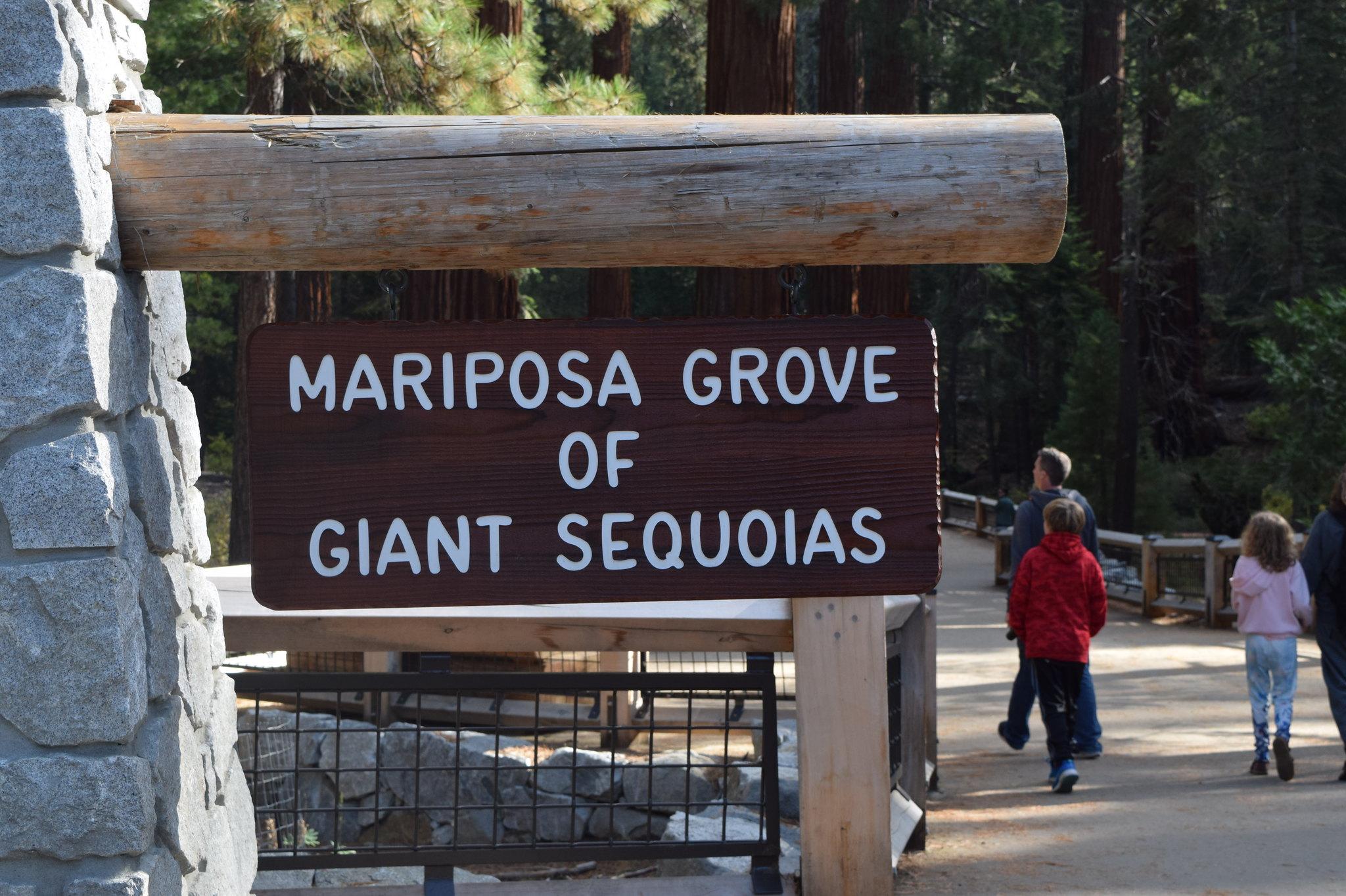 Yosemite National Park-Maripose Grove of Giant Sequoia