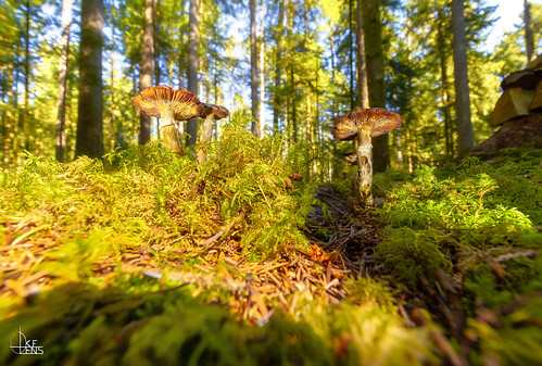 Mushroom Hunter Selection