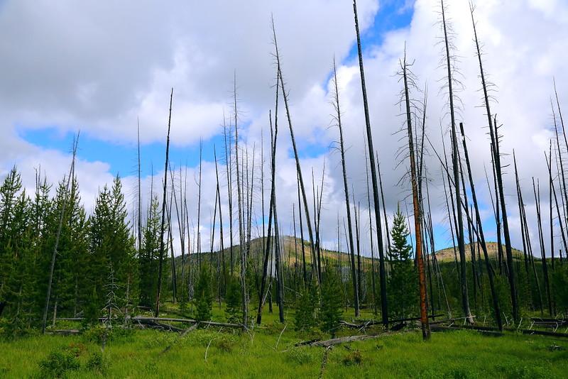 IMG_7770 Fairy Falls Trail, Yellowstone National Park