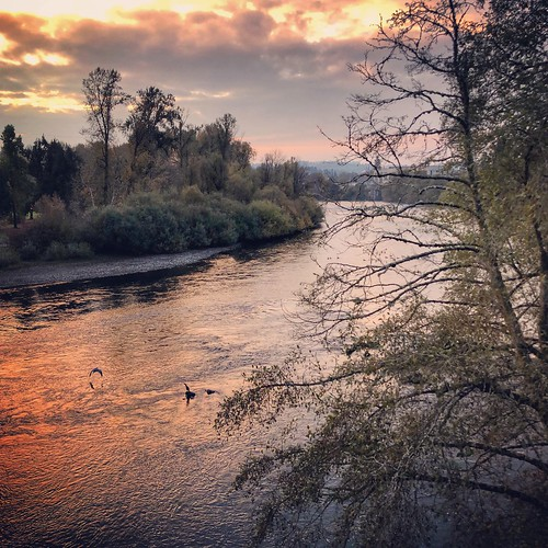 oregon willametteriver