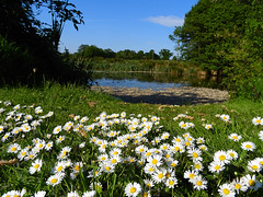 Macclesfield-201805-176-Redesmere-Pool