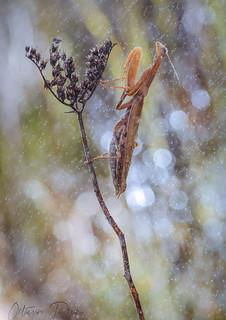 orando bajo la lluvia