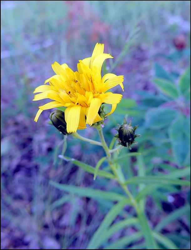 Касарги 8754 Flores.