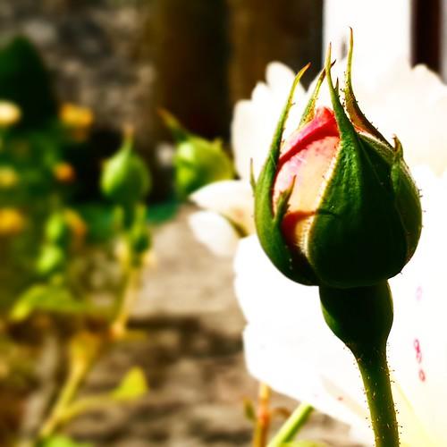 Toscana: eremo di Camaldoli