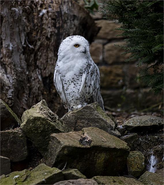 Harewood House Bird Park