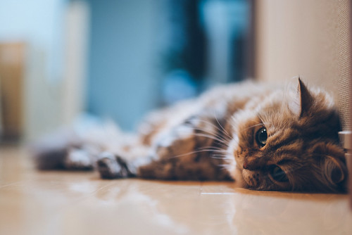 Does a cat become more thoughtful with age, or just lazier? | by torode